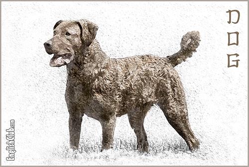 Dog - Chinese Zodiac Animal
