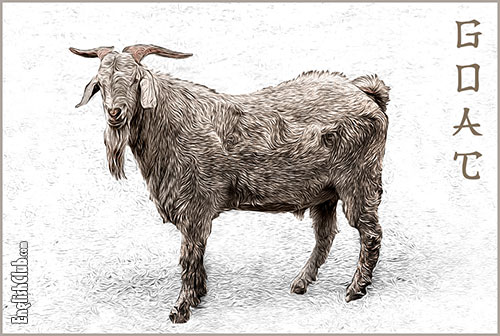 Goat - Chinese Zodiac Animal