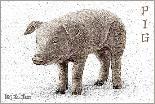Pig - Chinese Zodiac Animal