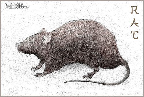 The Rat - Chinese Zodiac Animal