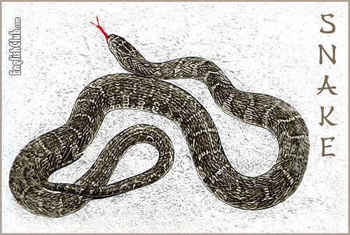 The Snake - Chinese Zodiac Animal