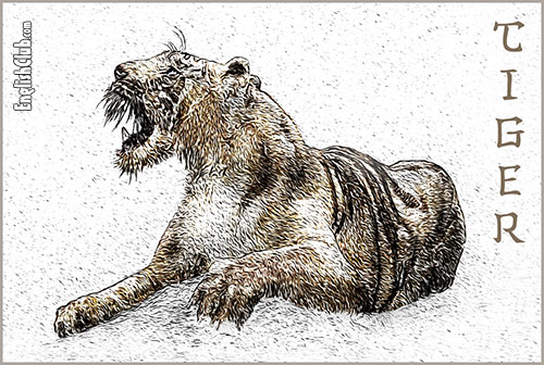 Tiger - Chinese Zodiac Animal