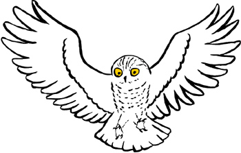 How To Draw A Owl Flying on Eating Fruit