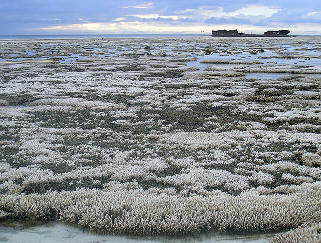 bleached coral in Australia with resulting habitat loss