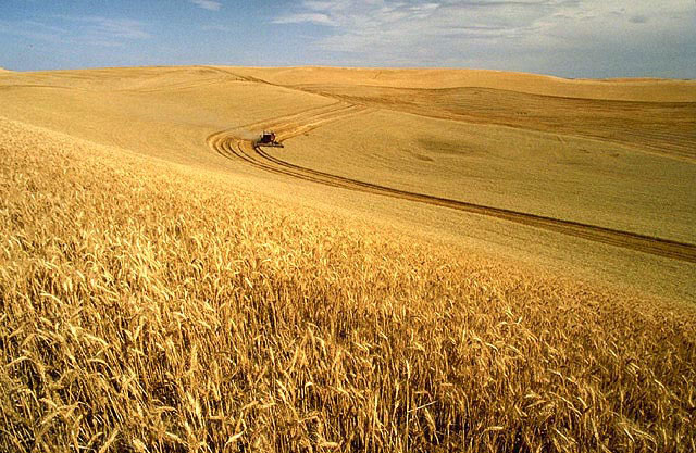 wheat field in USA leaving wildlife with nowhere to live