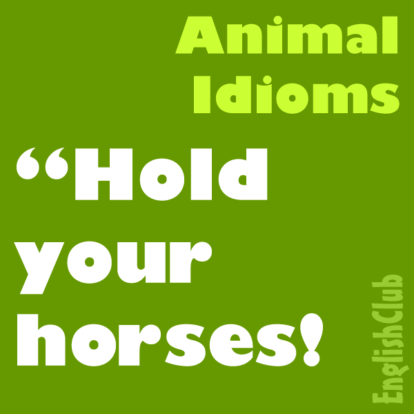Animal Idioms | Vocabulary | EnglishClub